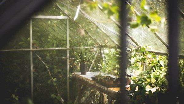 Kolorowe rośliny do ogrodu Dobrzany